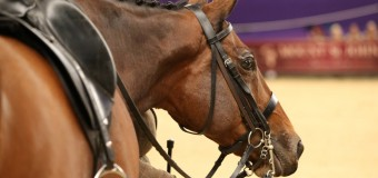 Equestrian Showing Season 2015